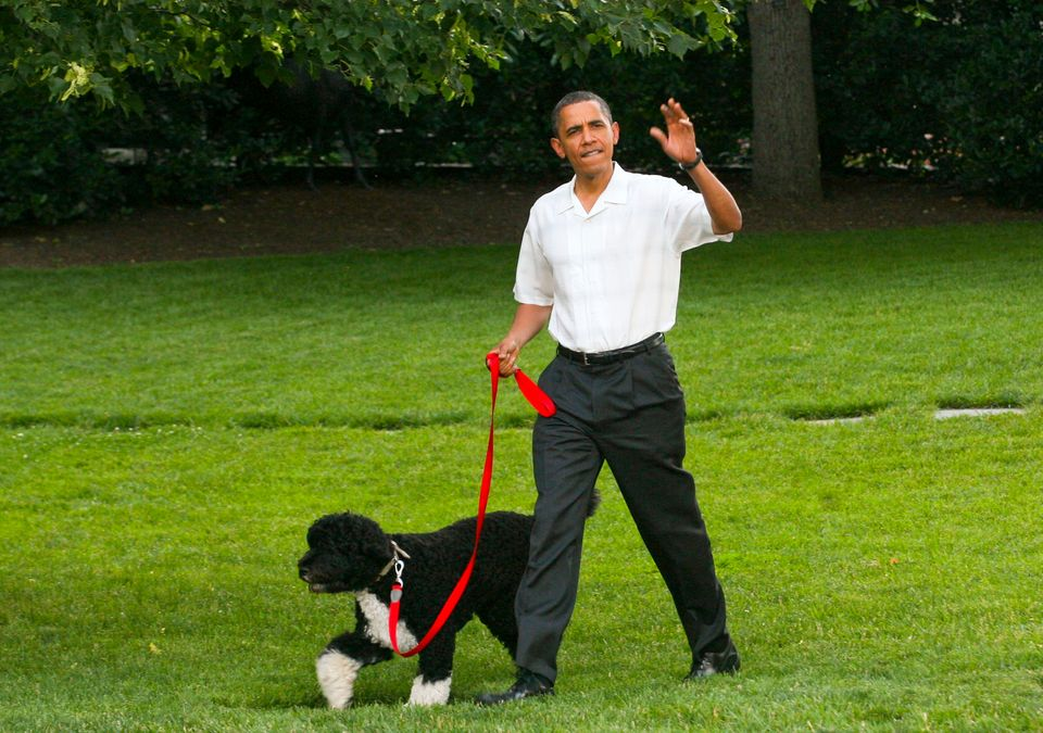 U.S. President Barack Obama walks his dog Bo on the South Lawn of the White House in Washington D.C., on June
