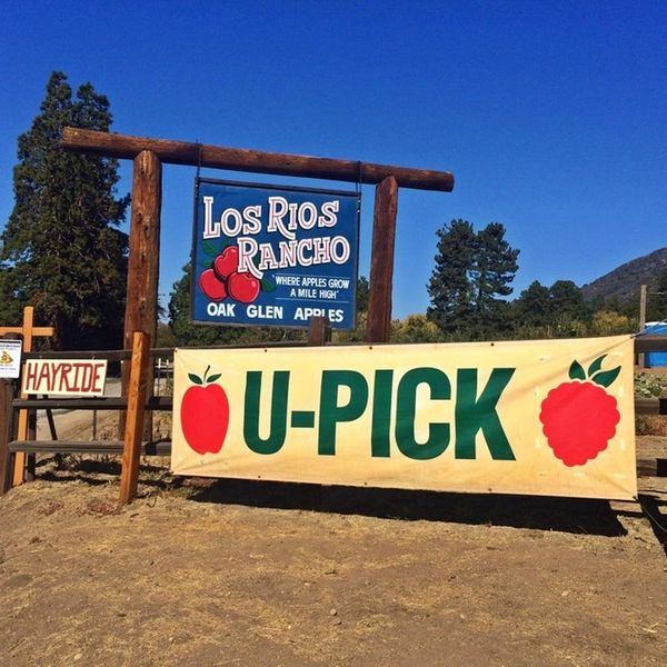 "Get ready for <a href=""http://www.losriosrancho.com/index.html"">hayrides and pies</a> at this farm with <a href=""https:/"