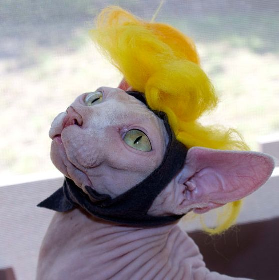 """<a href=""""https://www.etsy.com/listing/240556333/trump-your-cat-wig-really-silly-cat-wig?utm_source=google&utm_medium=cpc&"""