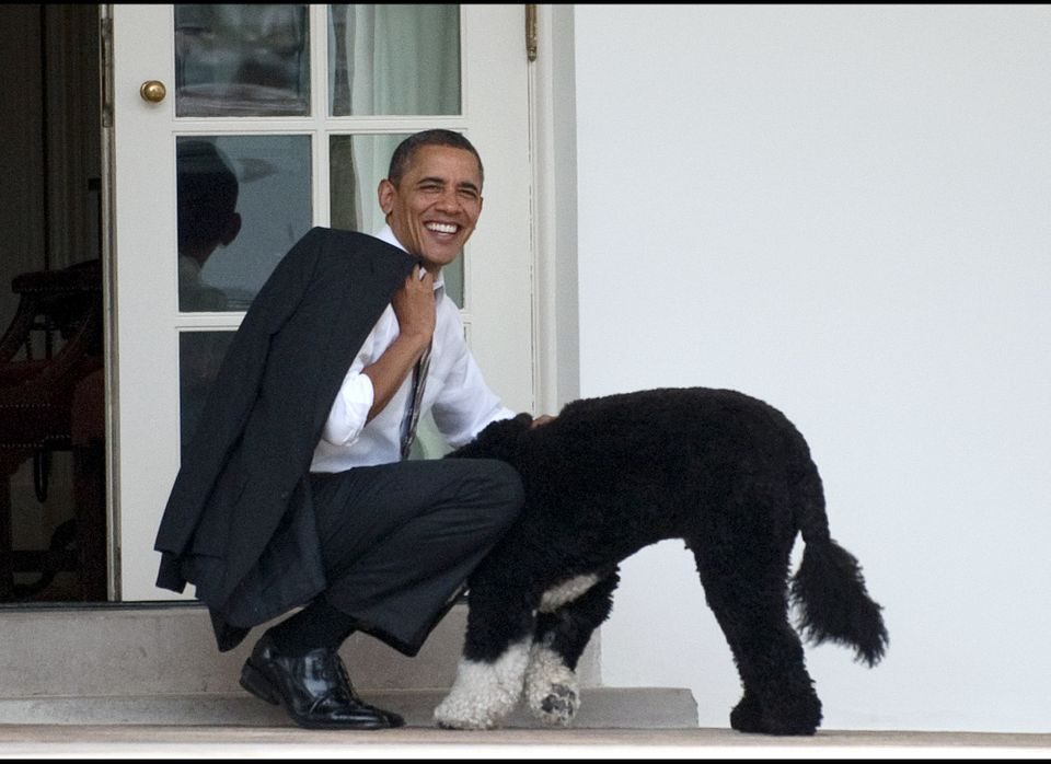 President Obama pets the family dog, Bo, upon his return to the White House on March 15, 2012.
