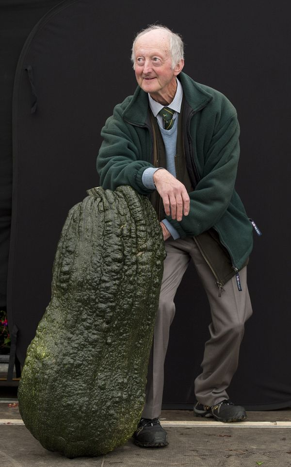 Peter Glazebrook stands with his winning 52.2kg (115.08 lbs.) entry in the 'Heaviest Marrow Competition' at the Harrogate Aut