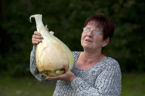 Barbara Cook, competitor in the Heaviest Onion Competition, poses for a photograph with her winning onion.