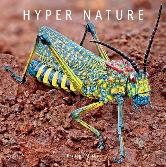 This beauty is a member of a family of grasshoppers known as gaudy grasshoppers. <br><br>Taken with permission from