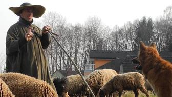 Hans Breuer with his flock of sheep in Burgenland, Austria.
