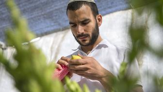 An ultra-Orthodox Jewish man inspects a citron (or 'Etrog' in Hebrew), one of four plant species to be used during the celebration of Sukkot, the feast of the Tabernacles, in the Israeli Mediterranean coastal city of Netanya on September 25, 2015. The Sukkot feast, which starts on September 27, is a week-long holiday when people eat and sleep in makeshift booths in their gardens and commemorates the exodus of Jews from Egypt some 3200 years ago. AFP PHOTO / JACK GUEZ        (Photo credit should read JACK GUEZ/AFP/Getty Images)