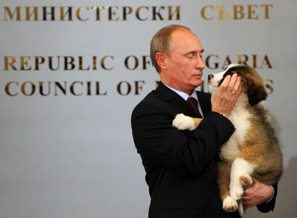 Putin hugs a Bulgarian shepherd dog -- a gift from Bulgarian Prime Minister -- after a press conference in Sofia, B