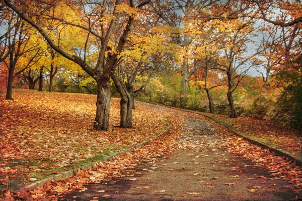 Median Hotel Rate: $216<br><br>Do you love all things autumn? Then you love Toronto, you just don't know it yet. There are ap