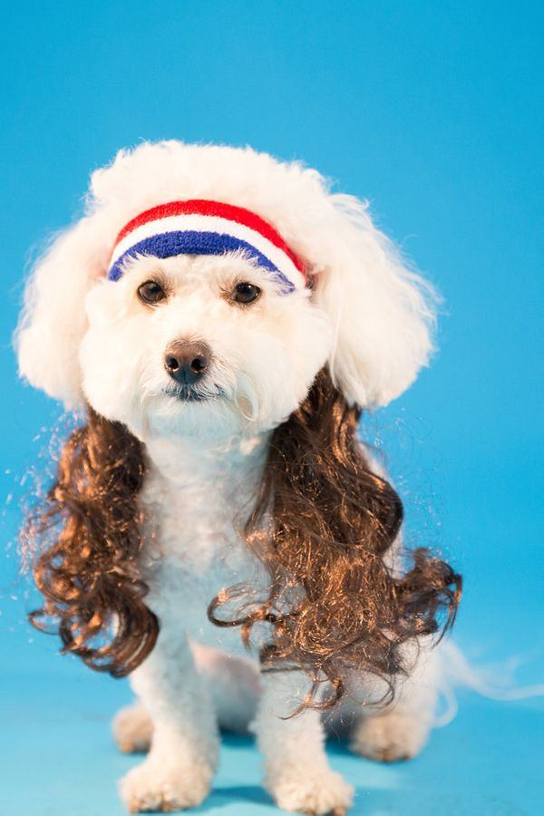 "Want your dog to be in on the Halloween fun? With this pet-sized <a href=""http://www.mulletonthego.com/collections/mullets-fo"