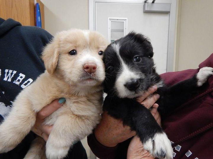 "Two puppies getting an exam after evacuation.&nbsp; (<a href=""https://www.facebook.com/TheSecretLifeOfDogCatchers/"">Facebook/"