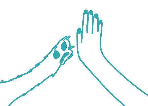 When a dog initiates a high-five