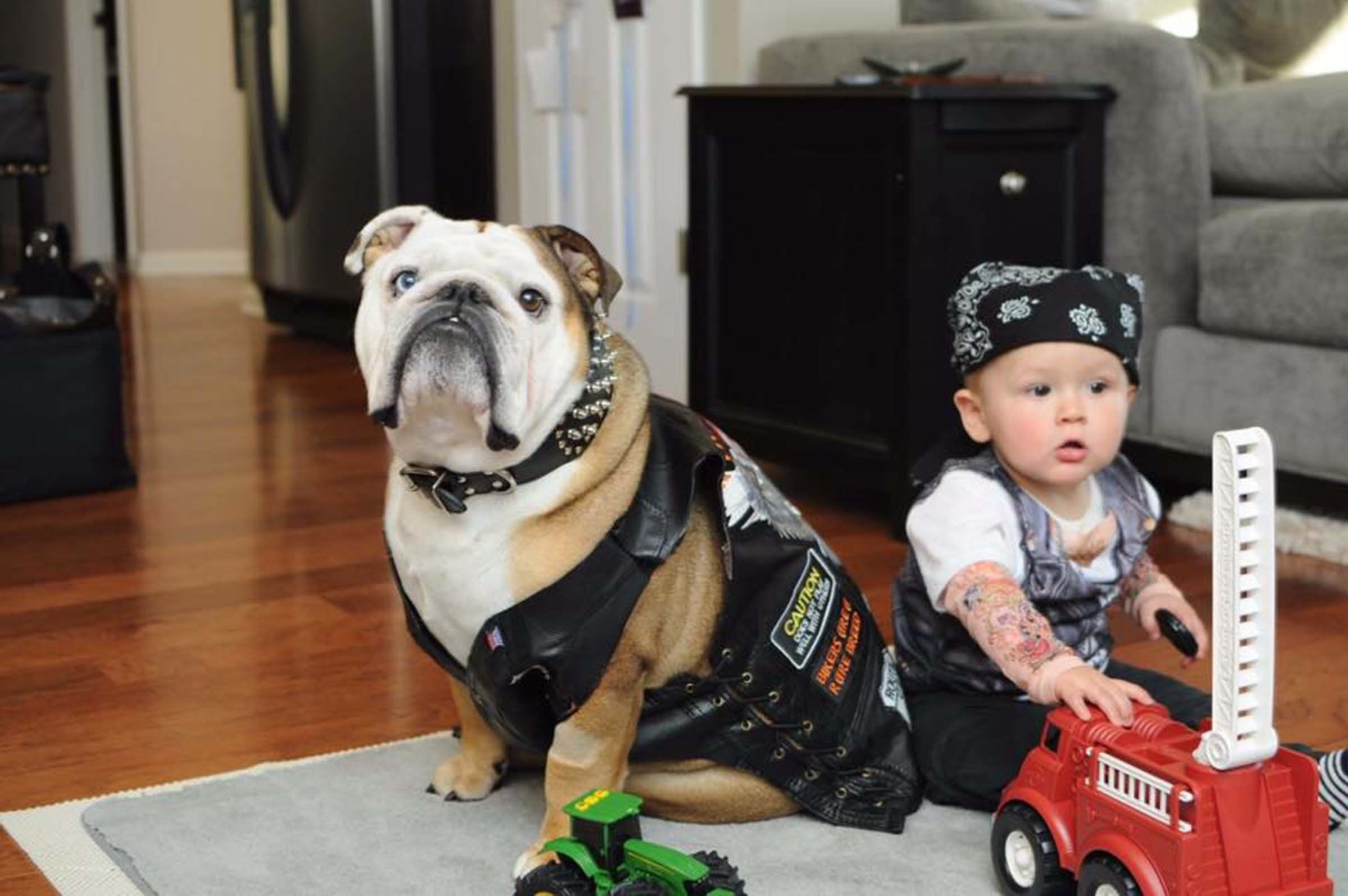Dog Halloween Costumes Make