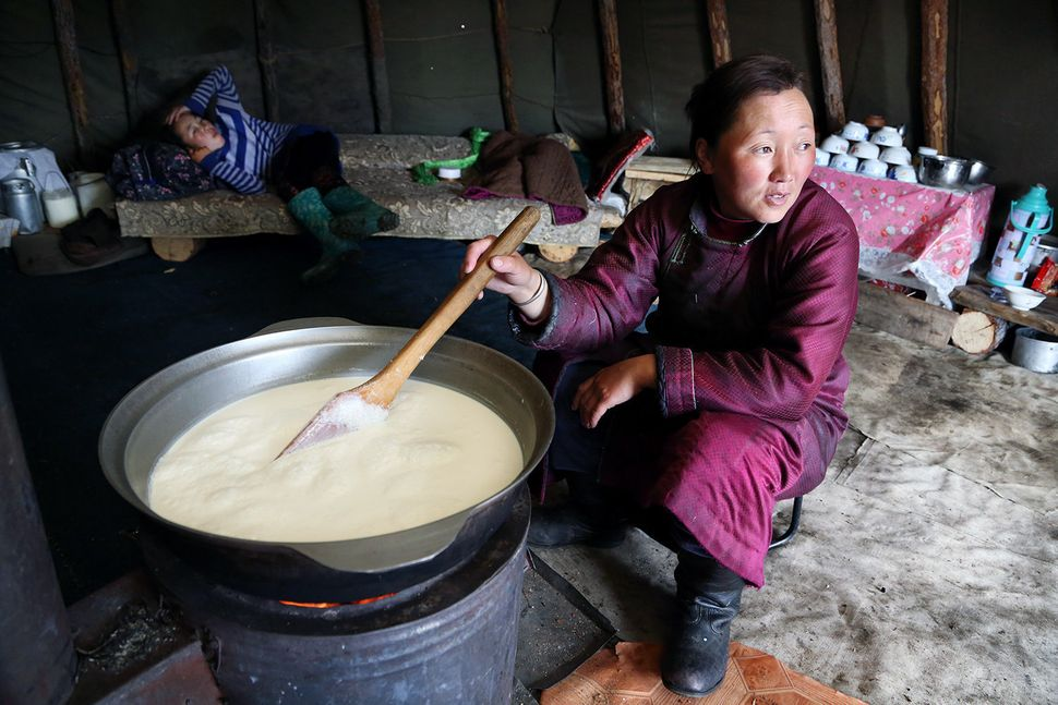 Bolorma is boiling the family's daily milk ration. She will latermake cheese out of it.