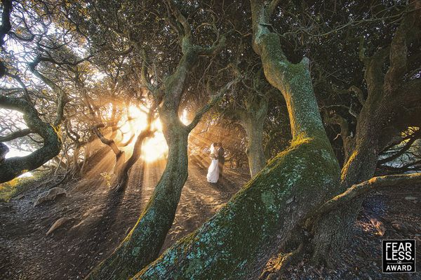 """With the sun at a low angle below the tree crowns, this grove was filled with soft streams of light. The couple was perfectl"