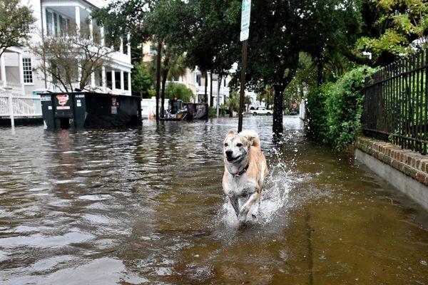 A dog runs on a flooded street in downtown Charleston, South Carolina, on Sunday.