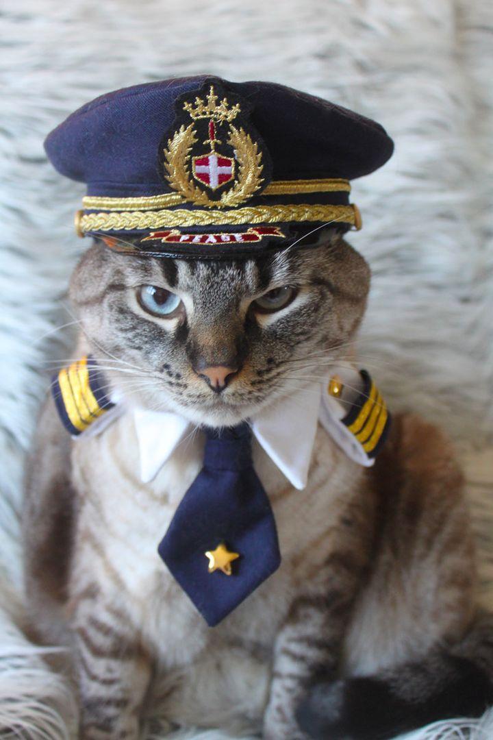 Отправить открытку, смешные картинки капитана