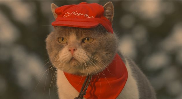 Some Cats Actually Work For A Living. Here Are 50 Of