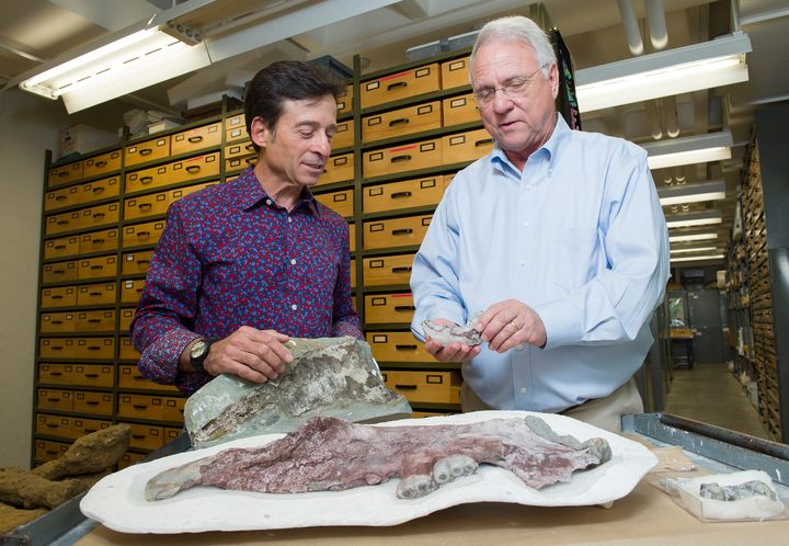 Paleontologists Louis Jacobs (right) and Anthony Fiorillo (left) have identified a new species of marine mammal from bones re
