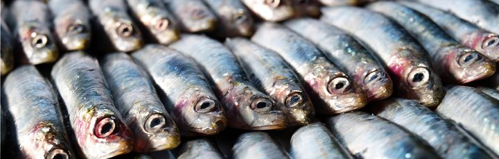 Anchovies are a good low-mercury seafood choice.