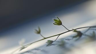 Pressed flower in book of poems