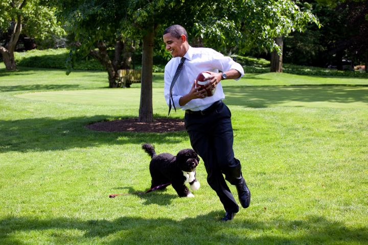 In this handout from the White House, Obama plays football with the family dog Bo on the South Lawn of the White House May 12