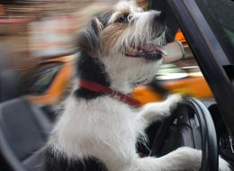 DUI Suspect Allegedly Claimed Dog Was Driving Car