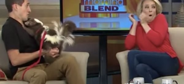 News Hosts Hilariously Pranked With Spraying Skunk