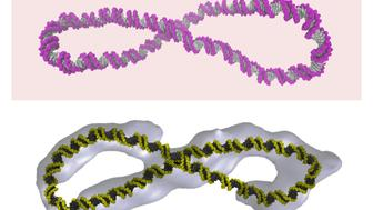 New diagrams showing the structure of DNA, with the familiar double helix bent into a circle or twisted into a figure-8.