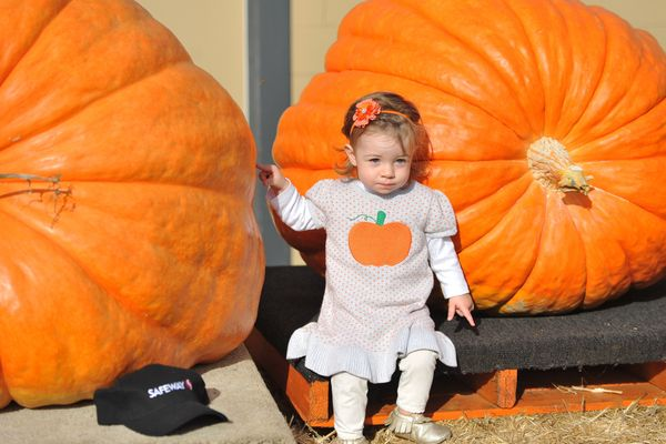 A young girl poses with giant pumpkins during the 42nd annual Safeway World Championship Pumpkin Weigh-Off Contest in the Wor