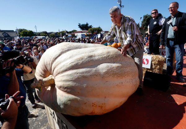 Steve Daletas, of Pleasant Hill, Ore., poses with his winning 1,969-pound pumpkin at the Safeway World Championship Pumpkin W