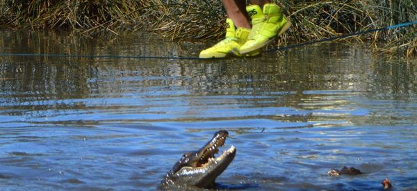 GULP! Daredevil Walks Slackline Over Hungry Alligators