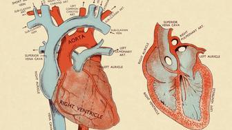 Diagram of Heart