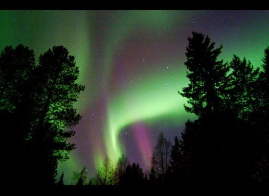 Aurora Borealis with green and purple in Northern Finland<br><br><strong>Why Go</strong>: Head to Luosto in Northern Finland