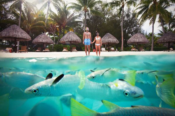"""""""This photo was taken on the day of Anne and Conrad's elopement at the Four Seasons Bora Bora. Sitting in the lagoonarium, I"""