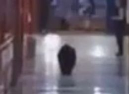 BEARLY EDUCATED: Bear Roams Through Montana High School