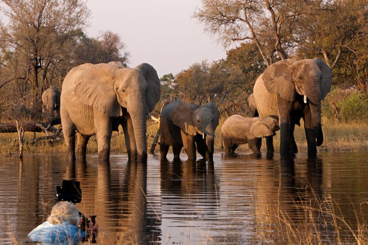 Filmmaker Dereck Joubert (left foreground) films a herd of elephants from the water in Botswana.