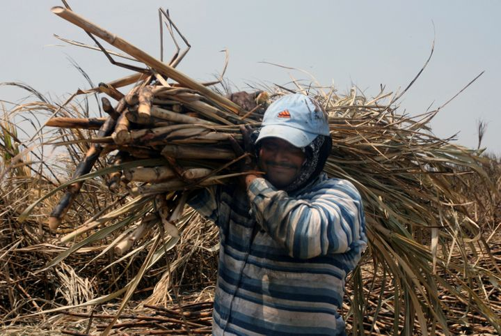 A worker hauls harvested sugar cane in the town of Chichigalpa, Nicaragua.