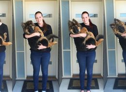 See This Puppy Grow To Size Of A Small Human In Just A Few Months