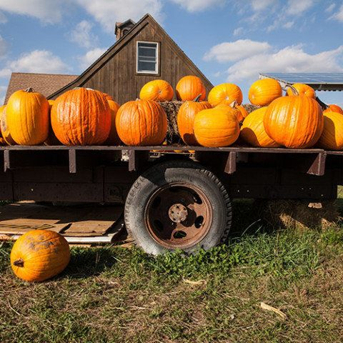 """""""Bigger pumpkins just have a presence,"""" Reckner says. Look for varieties like Prizewinners, which have a reddish hue, and Big"""