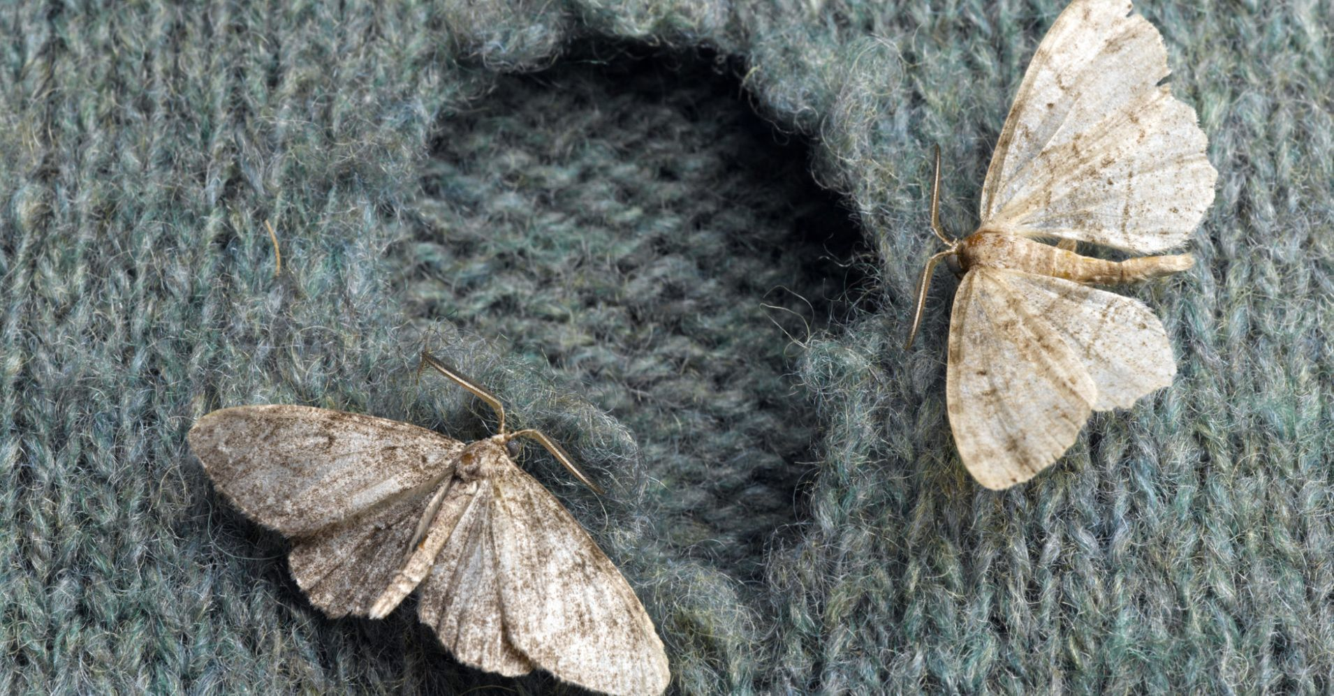 how to fix moth holes in wool