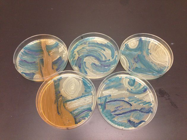 Melanie Sullivan's masterpiece to the American Society for Microbiology's first Agar Art contest