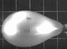 Slo-Mo Video Reveals The Bizarre Way Balloons Burst
