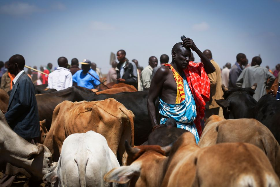 A Maasai man holds his cell phone amid his cattle on market day in Suswa, Kenya. With solar power, these