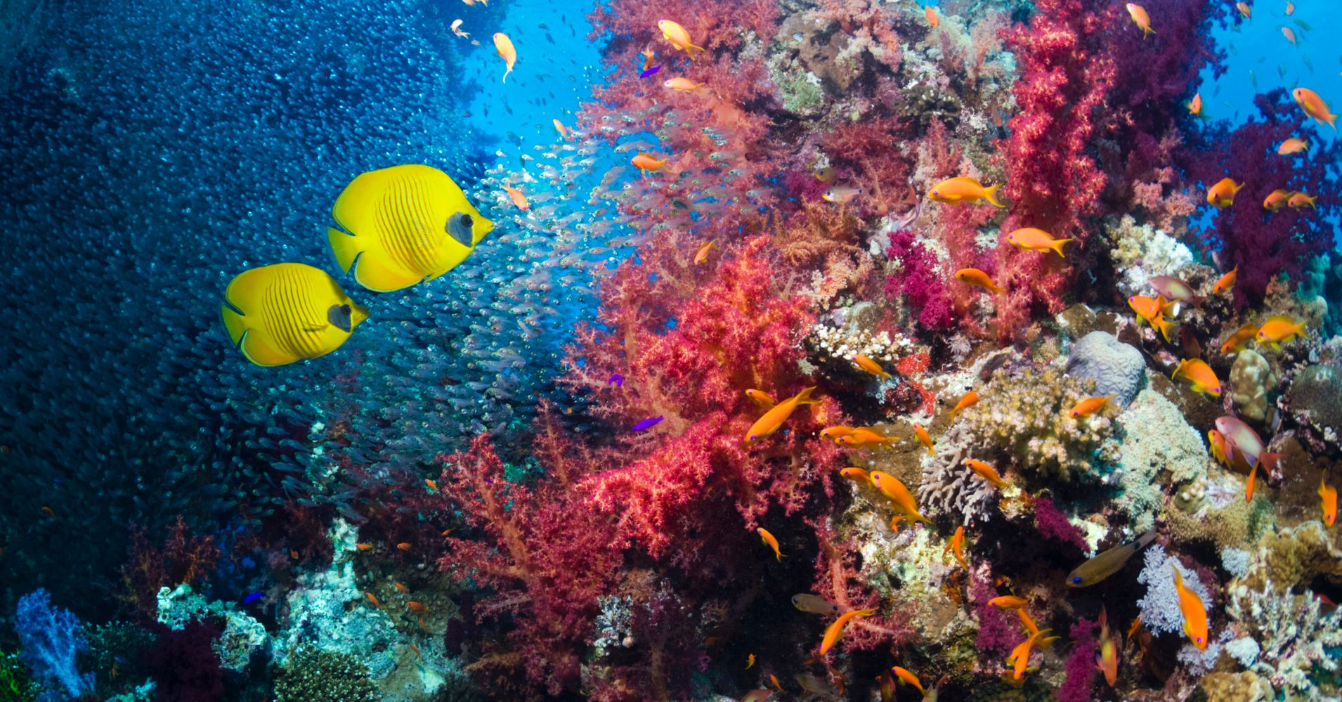the importance of coral reefs for sea ecosystems and our