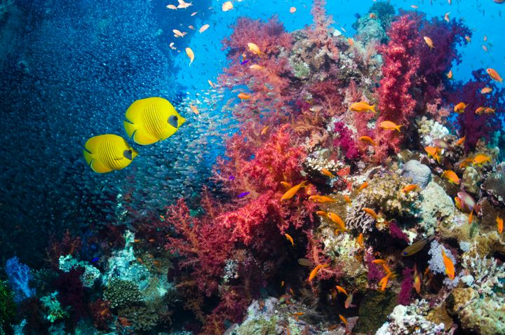 A new study says sunscreen may be damaging the planet's coral reefs.