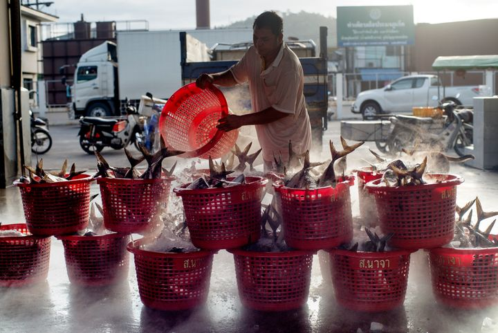 PHUKET, THAILAND - 2014/08/08: A migrant worker unloading fish on the mainland in Phuket. Trafficking and modern slavery are