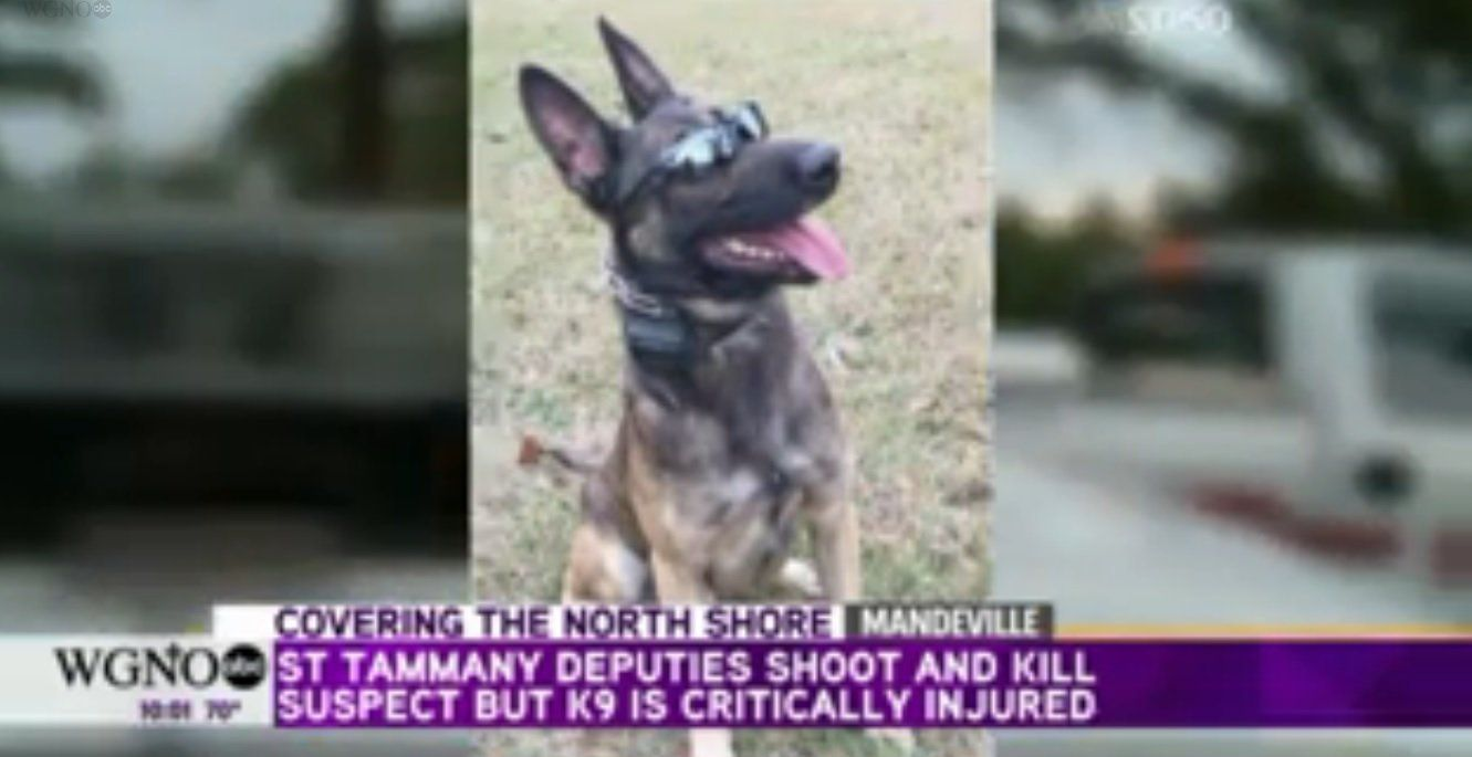 Louisiana police shot and killed a man suspected of stabbing a police dog on Tuesday.