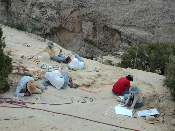Paleontologists work on a dig site in Utah that has already revealed eight new animals.