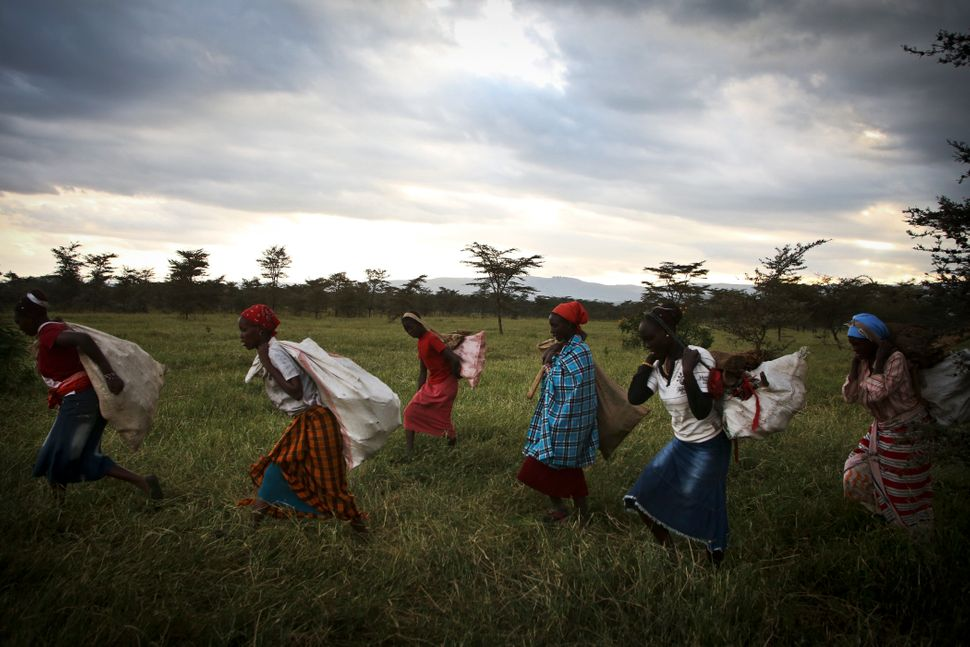 Kenyan women and girls bring firewood they have collected back to their villages. An estimated 3 billion people -- half