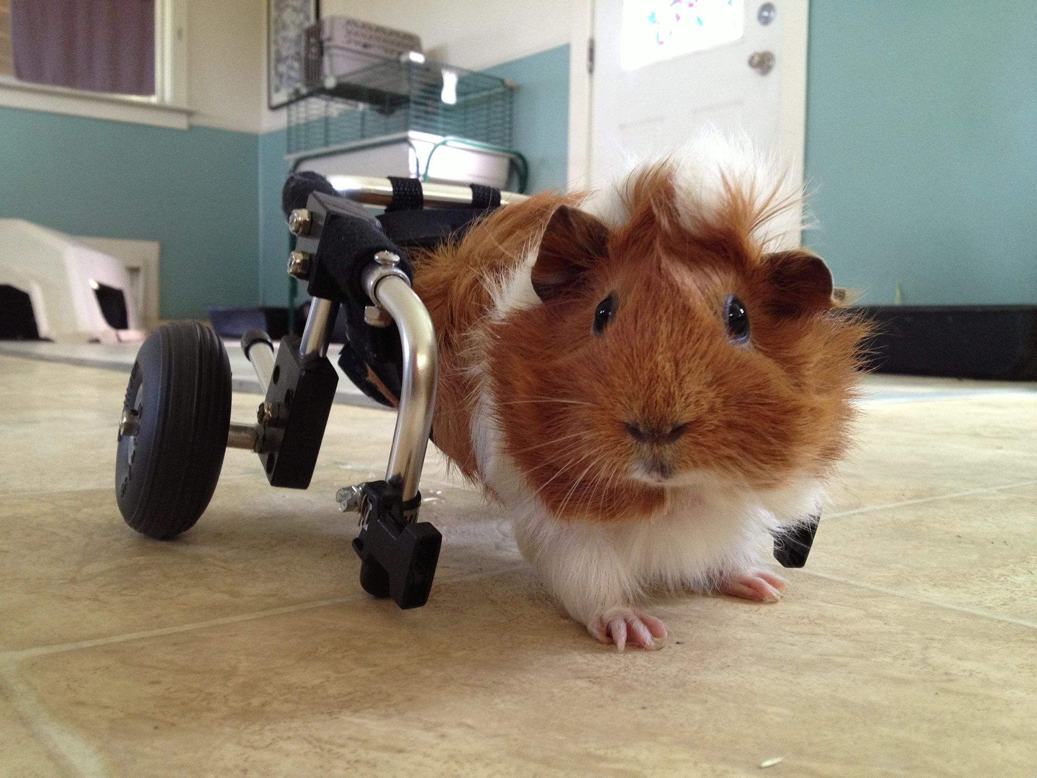 Estella trying out her new wheelchair at Harvest Home Sanctuary.