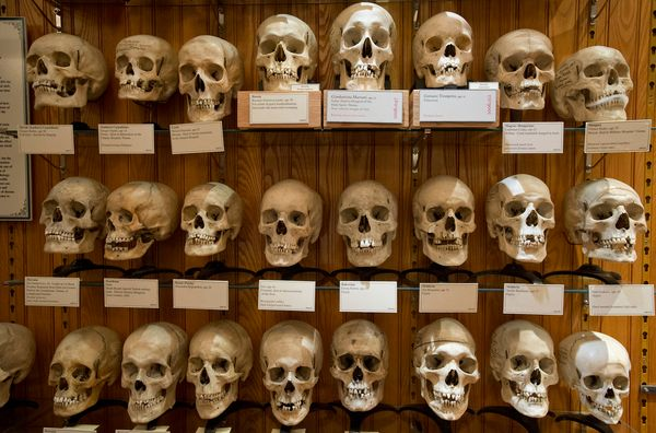 """Are you ready to be disturbingly informed?"" the Mütter Museum's website asks visitors from the get-go. The infamous cen"